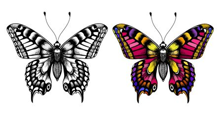 Kids Coloring Page. Black and white butterfly sketch and colorful butterfly. Coloring picture with butterfly. Illustration for T-shirt design, tattoo. Symbol of immortality, beauty and transformation.