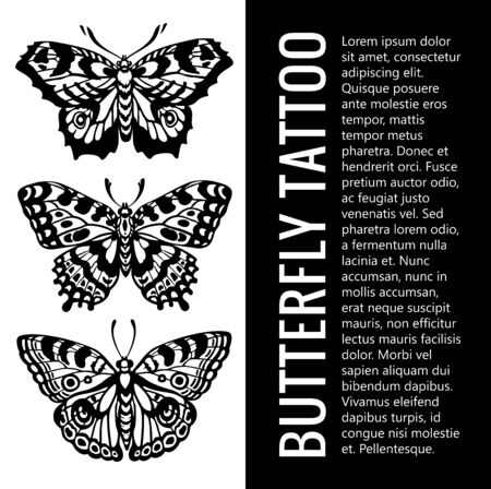 Collection of realistic vector butterflies