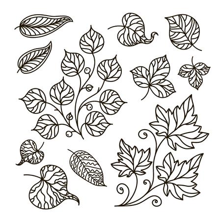 leaf line: contour illustration, coloring book, branch, set, leaves, summer, forest, nature, tree, black and white illustration, abstraction, design element