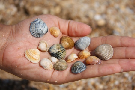 colorful sea shells on the palm in the summer
