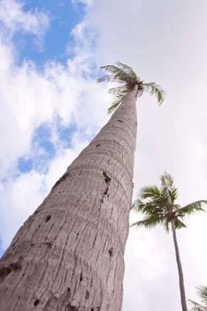 palm hight on blue sky in exotic country