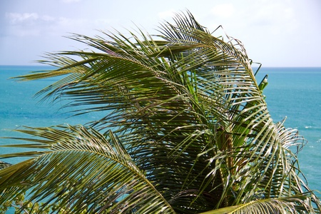 leaves green palm on blue sky and  and turquoise sea