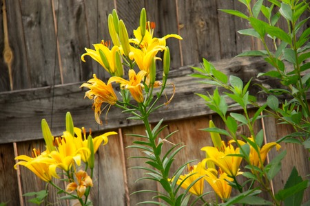 paling: fence or paling with flowers