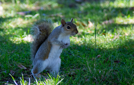 quick squirrel in the park