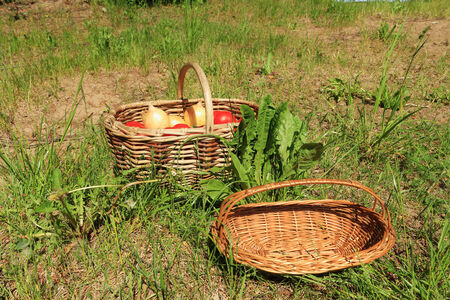 close up of onions in a basket: Wattled baskets for vegetables are in a grass outdoors