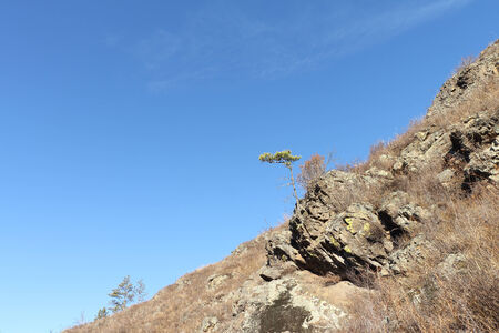 abrupt: The pine growing on the rock against the blue sky in a sunny day Stock Photo