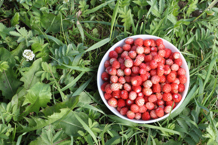 'wild strawberry: Ripe red wild strawberry in a plate in a grass in the wood