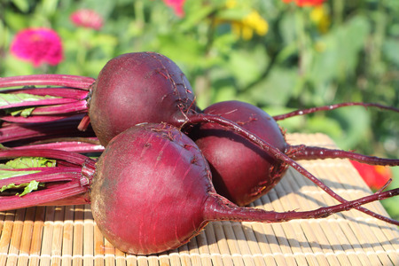 claret: The claret beet lying on a table in a garden