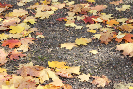droop: Asphalt path with the fallen yellow leaves in the fall