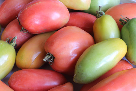 Background from the ripening tomatoes