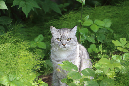 watchfulness: The gray cat sitting in a grass outdoors Stock Photo