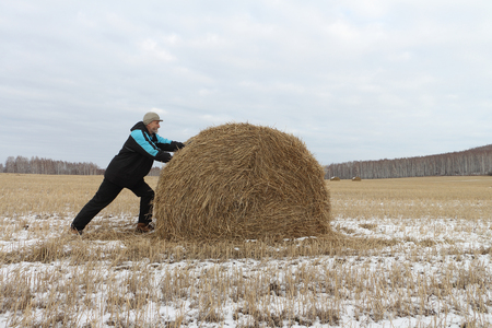 sheaf: The man the pushing hay sheaf in the field in the fall