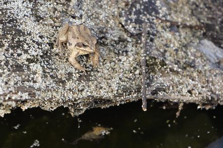 anuran: The frog sitting on a snag at a bog