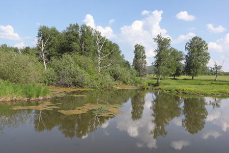 Bogging of a pond among trees in the summer