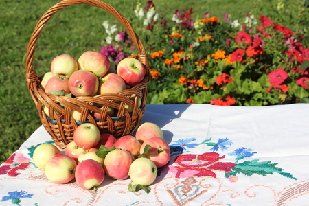 basket embroidery: Ripe apples in a wattled basket on a table in a garden against a grass and flowers