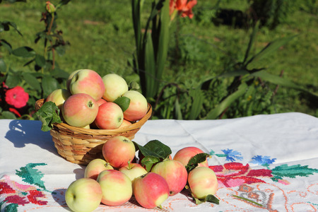 Ripe apples in a wattled basket on a table in a garden against a grass and flowers
