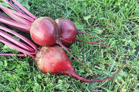 claret: Claret beets lying on a grass in a garden