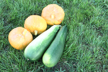 provision: Ripe pumpkins and vegetable marrows on a grass in a garden Stock Photo