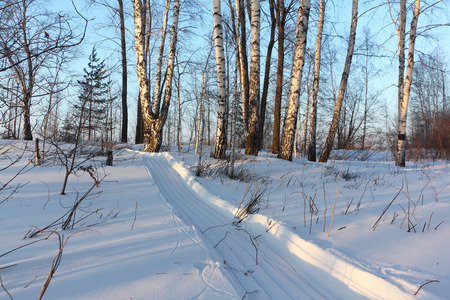 Trail from a snowmobile in a snowy forest in winter, Siberia, Russia