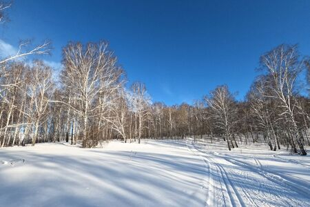 Ski track in a forest among birches in the countryside for sporting events, Novosibirsk, Russia 版權商用圖片