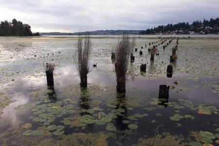 Lake Washington in the evening, Seattle, USA