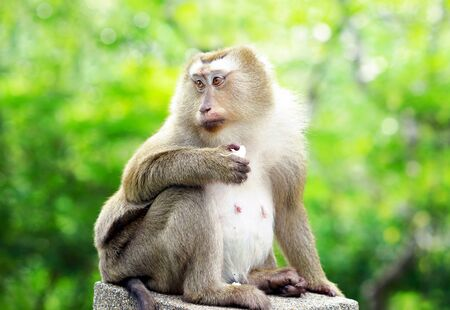 ancestor: old monkey sitting on fence on green bokeh background