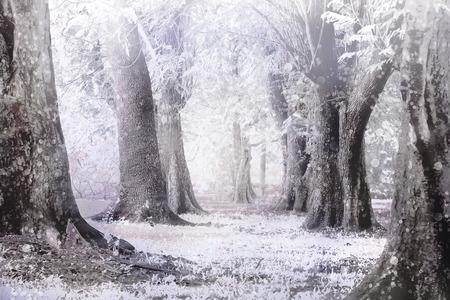 winter mistig en sneeuw storm in een bos Stockfoto