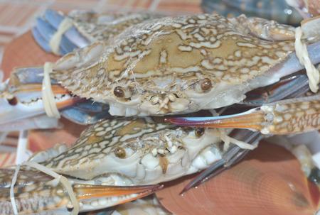 Crab bound stacked. Standard-Bild