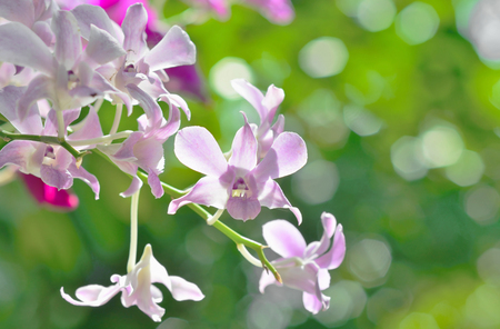 backlight purple orchid on background bokeh
