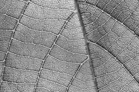 black and white texture more noise leaf pattern