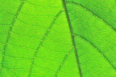 green leaf pattern texture