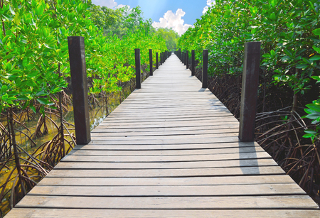 Wooden walkways in mangrove forest