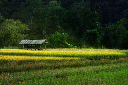 A cottage on rice paddies in the mountains in the middle of the forest.