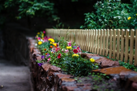 Beautiful flowers at the light fence after a summer rain Stock Photo