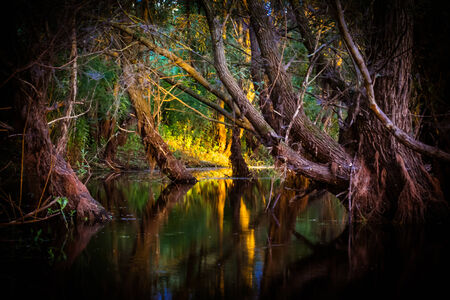 River in mysterious forest