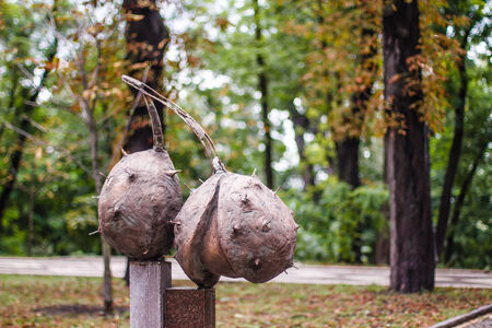 bronze sculpture of horse chestnut in Kiev autumn park