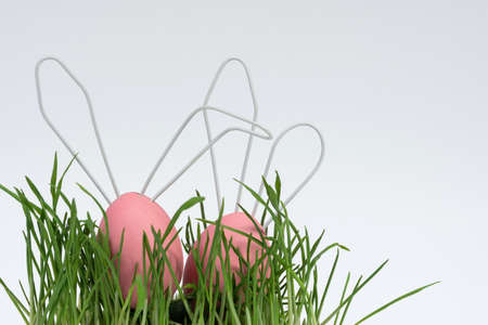 Two Easter eggs painted pink, cute rabbits with white ears, look out from the green grass. Concept decoration for happy Easter. Close-up, white isolated background. 版權商用圖片