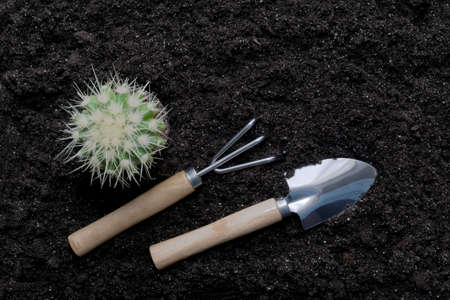 Top view of a houseplant, cactus and garden tools against a background of scattered earth. The concept of caring for home plants, transplanting, fertilizing.