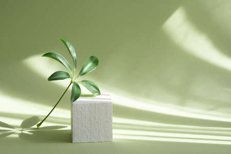 Green branch of palm tree next to square pedestal of white color against background of light green walls. Soft shadows from the sunlight. 3d-podium for presentation of goods, cosmetics, goods.