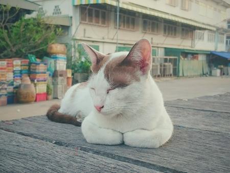 kitty cat: Cat