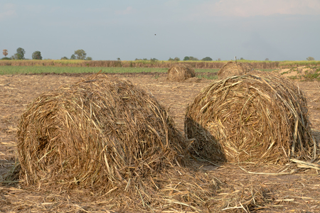 biomass: Role of sugar cane straw on field for biomass fuel