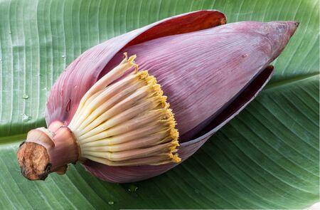 banana leaf: flor de pl�tano en hoja de pl�tano