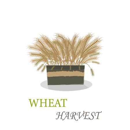 Wheat harvest season symbol and idea 写真素材