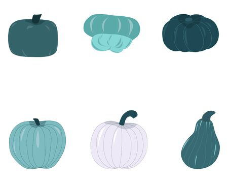 Fall harvest blue green pumpkins isolated on white background. Unique and delicious varieties of winter squashes. Vector Illustration. Çizim