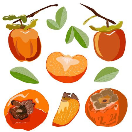 Persimmon set isolated on white background. Whole and sliced sharon fruit vector illustration. Collection for design, banner, menu, poster.