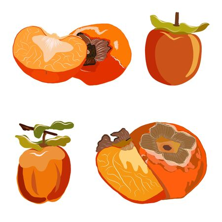 Persimmon whole and cut set isolated on white background. Sliced sharon fruit vector illustration. Collection for design, banner, menu, poster.