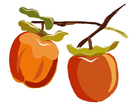 Sharon fruit branch with leaves isolated on white background vector illustration. Orange persimmon whole and cut for design, banner, menu, poster, apparel.