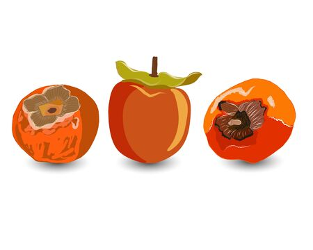 Tropical sharon fruit isolated on white background vector illustration. Orange persimmon whole and cut for design, banner, menu, poster, apparel.  イラスト・ベクター素材