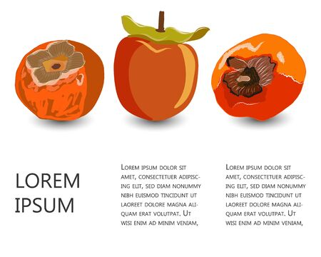 Set with tropical kaki fruit and copy space vector illustration. Orange sharon fruit collection for design, banner, menu, poster.  イラスト・ベクター素材