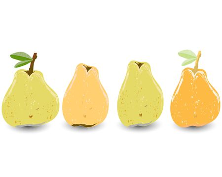 Four yellow and orange pears isolated on white background vector illustration. Summer fruit set for design, banner, menu, poster, apparel, card.